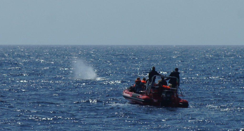 Observation des baleines et des dauphins Açores Activités