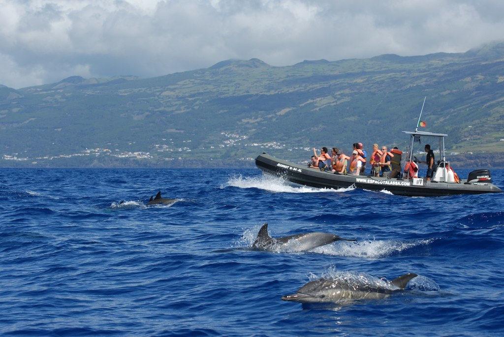 Nager avec les dauphins Açores Activités